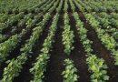 Tchad: Nomination au Ministère de l'Agriculture