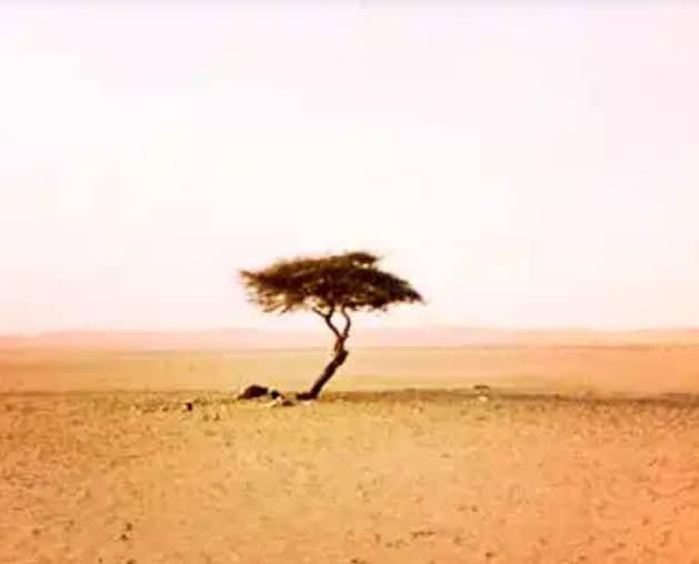Pohon Tenere