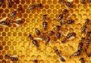 Tanzanie : production de miel pour protéger l'environnement